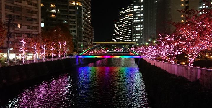 """秋から""""冬の桜""""へ"""