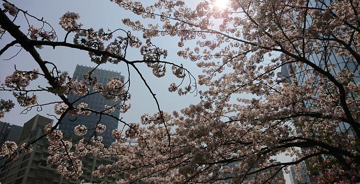 さまざまの事思ひ出す桜かな